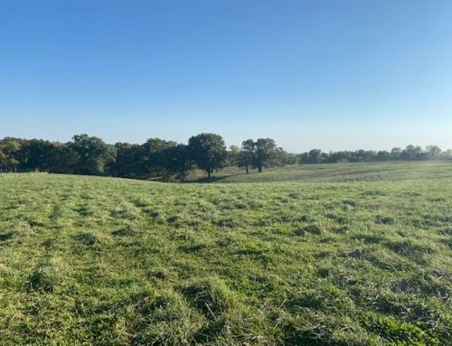$260,000.00….SOLD 2020…..EXCELLENT CATTLE FARM..82.38 Acres, m/l